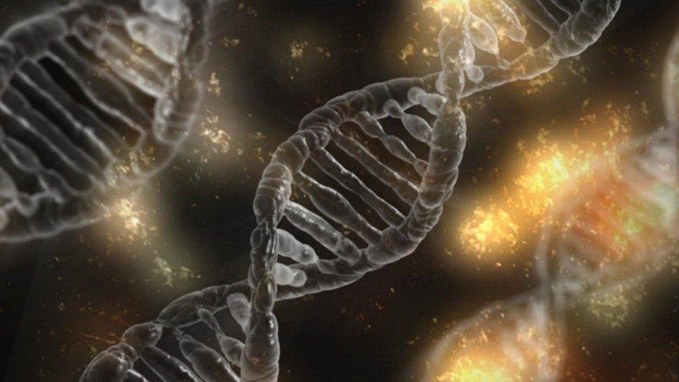 Connaître les différentes sortes de tests ADN pour trouver ses origines